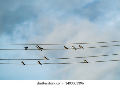 Several little swallows on power lines against blue sky with clouds