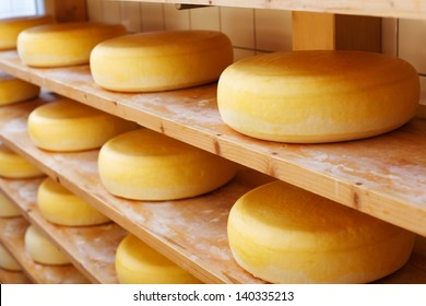 Several mature cheese-wheels on displayed on shelves at the cheesemaking shop