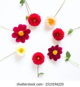 Several multi-colored dahlia flowers on a white background in a circle. Beautiful floral background