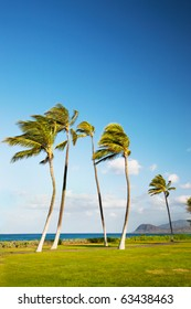 Several palm trees blowing in the wind near the ocean in Hawaii.  Room for copy.