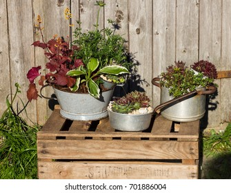 Several perennial plants, planted in vintage kitchen utensils like old cooking pots and tins.