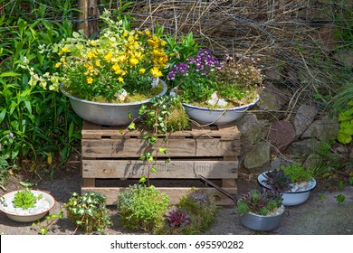 Several perennial plants potted in old containers a great cottage garden decoration.
