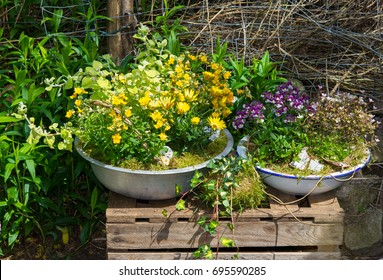 Several perennial plants potted in old containers.