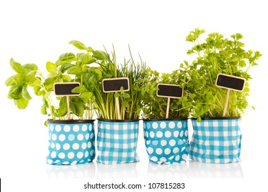Several pots with kitchen herbs on white background