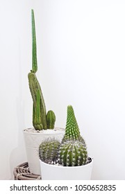 Several potted cacti in front of white background