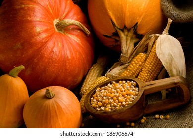 Several pumpkins of different size and dry corn cobs and corn seeds