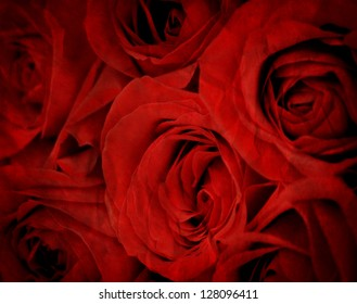 Several Red Roses Isolated on white background
