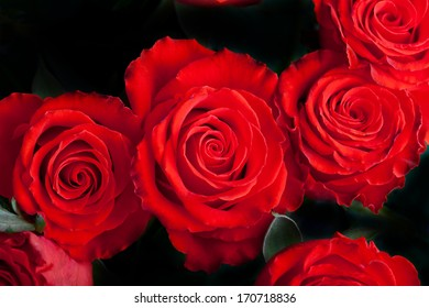 Several scarlet roses with leaves on dark background