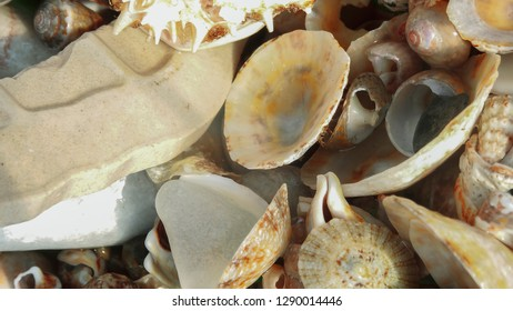 Several shells in plate,