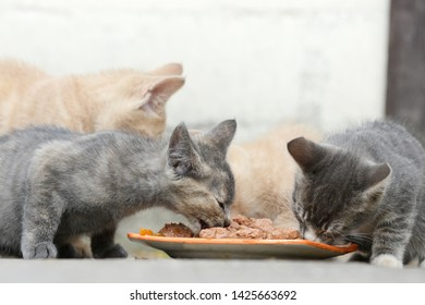 several small  kitten eat cat food on front of shed