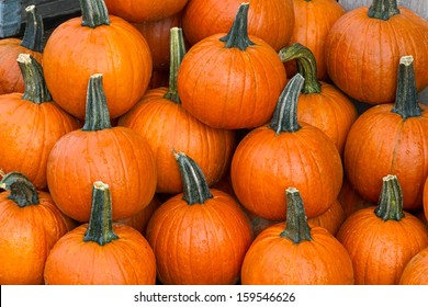 Several small to medium sized orange pumpkins are display at a farmers market produce stand at fall harvest time.
