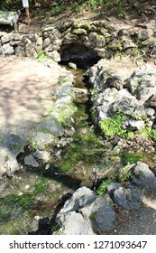 Several species of algae exist on rocks in Hot Springs Arkansas. These algae can tolerate the high temperatures of water in the 47 springs which is often over 100 degrees Fahrenheit.