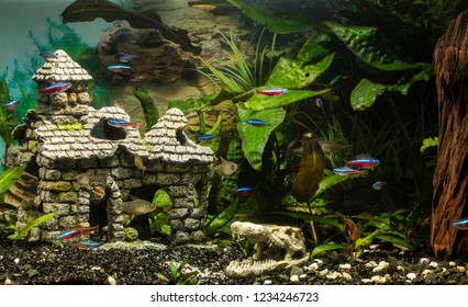 Several species of neon and tetra in the aquarium.