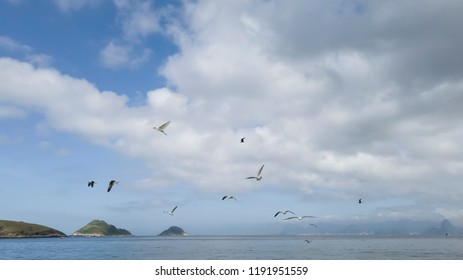 Several species of sea birds, including the Sterna hirundinacea swallow, in an exciting joint flight, during a tour of Itaipu beach, Niteroi, Rio de Janeiro, Brazil.
