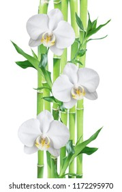 Several stem of Lucky Bamboo (Dracaena Sanderiana) with green leaves and three white orchid flowers, isolated on white background