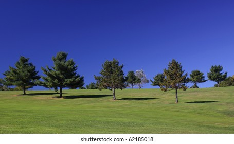 Several trees on a well manicured lawn with brilliant blue sky.