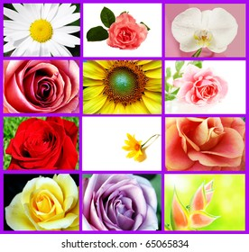 Several types of beautiful flowers in a collage