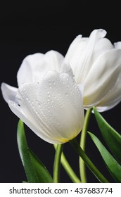several white tulips with water drops on a dark background. vertical image