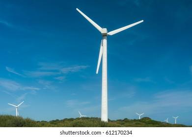 Several white wind turbines rising from coastal scrub against blue sky