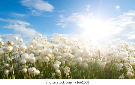 Several whites fluffes on green field