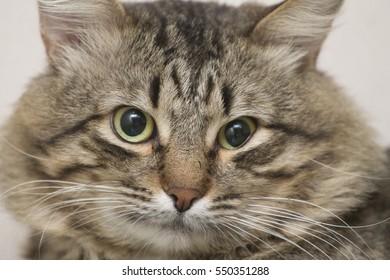 a severe cat