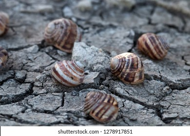 Severe drought in recent years in Europe and dead grape snails. Global warming leads to prolonged heat, depletion of water resources (chapped ground) as feature of total aridization, desert advancing
