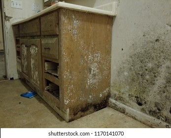severe mold damage on cabinet and wall in bathroom from water damage