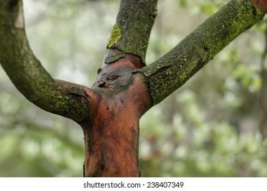 severed tree