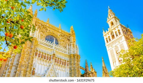 Sevilla Cathedral and Giralda tower over blue sky in Seville. Colorful sunny landscape view of Sevilla