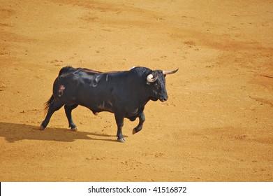 SEVILLE - APRIL 30:A Spanish bull walks into the ring at the Plaza de Toros de Sevilla April 30, 2009 in Seville, Spain.