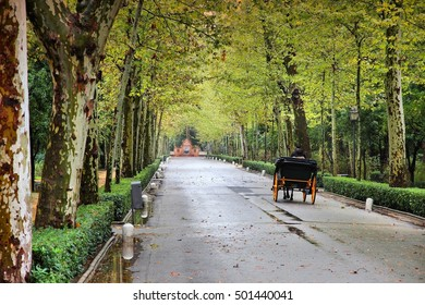 Seville, Spain - Maria Luisa park. Plane tree lined alley.