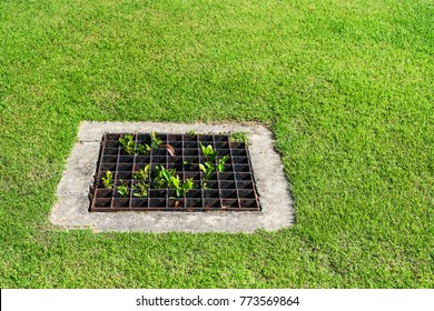 The sewer grate on the lawn - drainage for heavy rain.