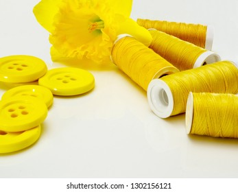 Sewing notions in yellow with a daffodil. Yellow sewing threads and yellow buttons on a white background.