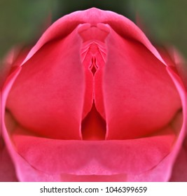 sex, pussy, vulva, clitoris, vagina, Orgasm, love, spring, bloom, petal, Erotic rose flower, Flower imitating the female sex, visual allegories, visual metaphors, photographic allegories, metaphors,