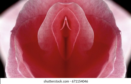 sex, pussy, vulva, clitoris, vagina, Orgasm, love, spring, bloom, petal, Erotic rose flower, Flower imitating the female sex, visual allegories, visual metaphors, photographic allegories, sexy,
