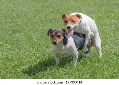 Animal Sex Images, Stock Photos & Vectors | Shutterstock