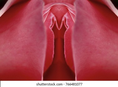 sex,pussy,vulva,clitoris,vagina,Orgasm,love, spring,bloom, petal, Erotic rose flower,Flower imitating the female sex,visual allegories,visual metaphors, photographic allegories,photographic metaphors,