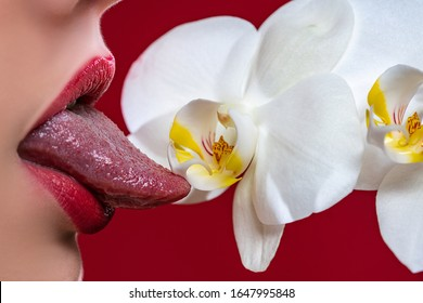 Sexy tongue. Erotic concept. Sexy lips with a ochid. Oral sex. Erotic woman secret and sex symbols concept. Orgasm. Talk sex. Fresh lubricant
