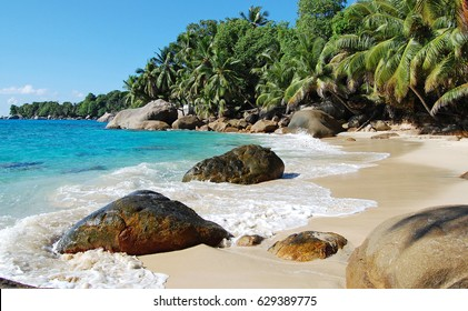 Seychelles beach with rocks and palm and ocean on the background on a sunny tropical day