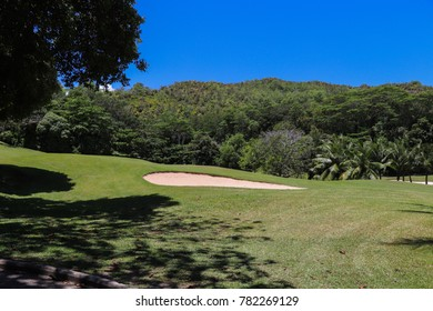 Seychelles nature. Flora of the islands