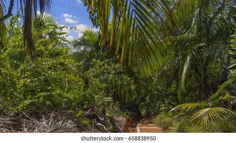 Seychelles, Praslin, Nature reserve Vallee de Mai.