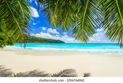 Seychelles, tropical beach Anse Lazio at Praslin island, most beautiful beach in the world. Paradise background under coco palm leaves: white sand, crystal-clear water and impressive pristine nature.