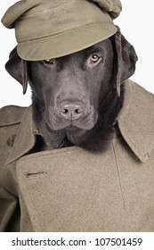 Sgt Labrador in Army Uniform