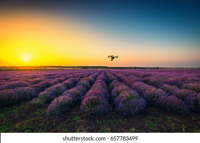 Shabla, Bulgaria - Juny 24 ,2016: Image of DJI Inspire 1 Pro drone UAV quadcopter which shoots 4k video and 16mp still images  and is controlled by wireless remote with a range of 2km, lavender field