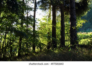 Shade and Low Light in the Woods