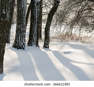 shade of trees in the snow on a sunny day