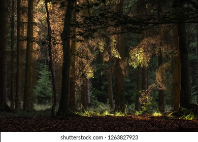shaded beaty forest