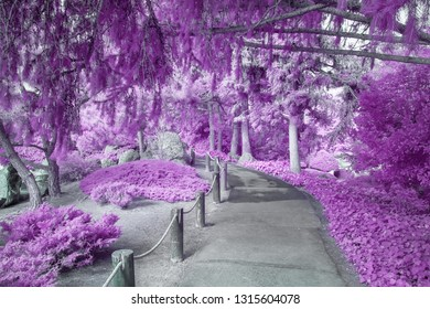 Shaded canopy of infrared color foliage over path in infrared color.