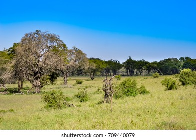 Shaded and green area in West Tsavo Park in Kenya