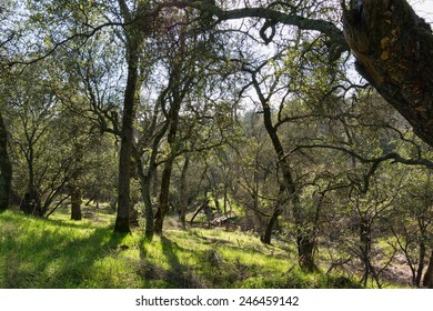 A shaded walk down a wooded slope, Auburn, California